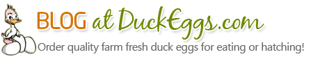 Blog at DuckEggs.com